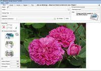 Génération Image pour mac