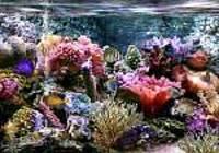 Aquarium 3D et Requin