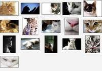 Cute Kitties Screensaver pour mac