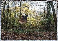 Oiseaux dans la forêt