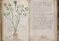 Le manuscrit de Voynich pour mac