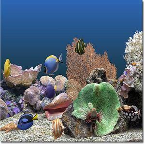 T l charger marine aquarium gratuit for Photo ecran veille gratuit