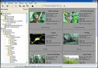 3D Photo Browser for Digital Camera pour mac