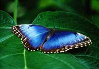 Free Butterfly Screensaver