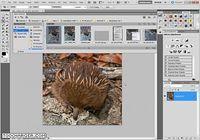 Adobe Photoshop CS6 pour mac