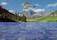 free 3D Dolphin Aqua pour mac