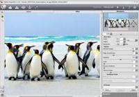 AKVIS Magnifier pour mac