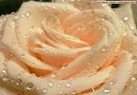 Fond d'Ecran Fleur 1024 pour mac